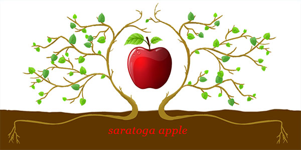 saratoga apple